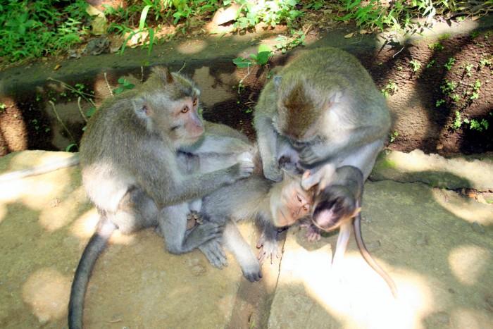 Bali - Monkey Forest / foto: dovolenkářka