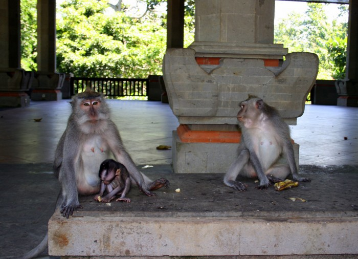 Monkey Forest / foto: dovolenkářka