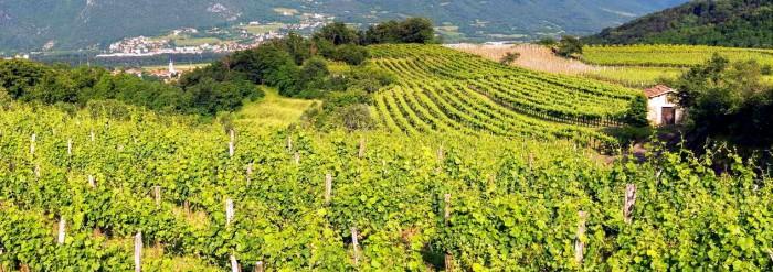 Slovinsko - Vinařství Rondič / foto: Vinařství Rondič
