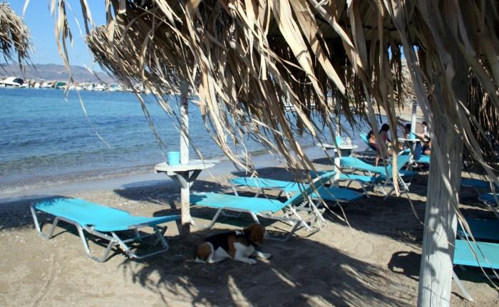 Řecko - ostrov Agistri Hotel Oasis Beach Skala/ foto:
